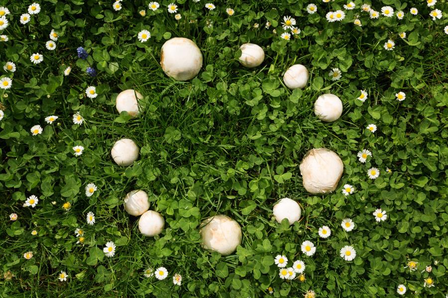 Pilze-im-Garten