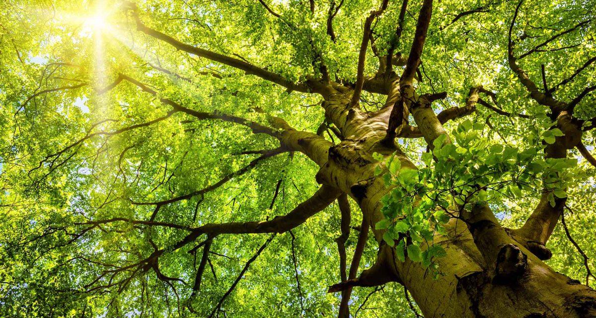 Gartenbau München Baumpflege