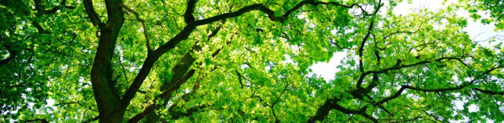 Kronensicherung am Baum