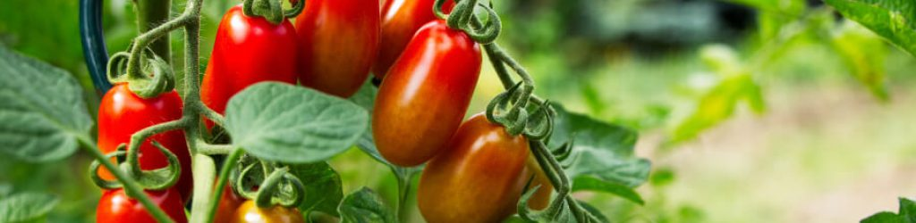 tomatenhaus-selber-bauen